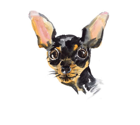 small dog: Russian Toy Terrier. Portrait small dog. Watercolor hand drawn illustration Stock Photo