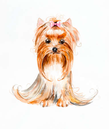 yorkshire terrier: Dog with a hood. Yorkshire terrier. Pink bow and hair dress. Watercolor hand drawn illustration