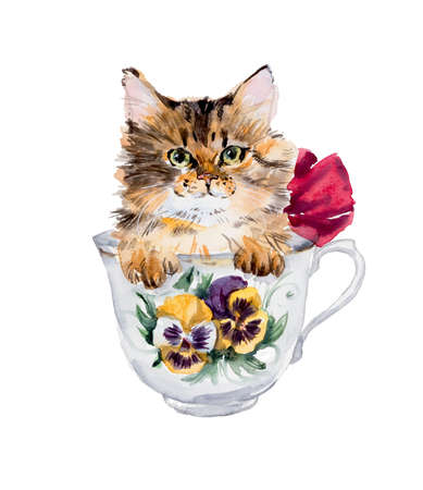 Kitten in the cup. Hand drawn watercolor illustration. Stock Photo