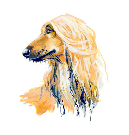 Afghan Hound. Gouache hand drawn illustration. Фото со стока
