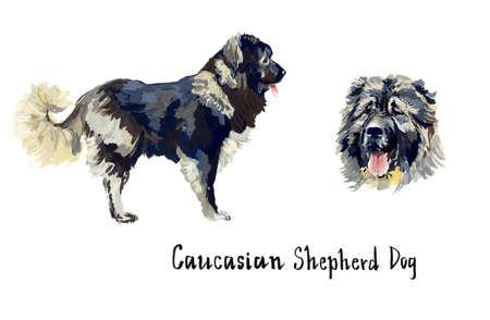 Caucasian Shepherd Dog. Gouache hand drawn illustration.