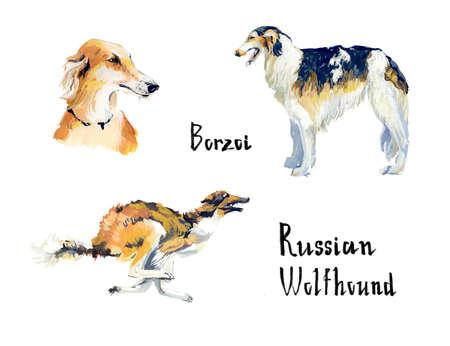 borzoi: Russian Wolfhound. Borzoi. Hound. Gouache hand drawn illustration.