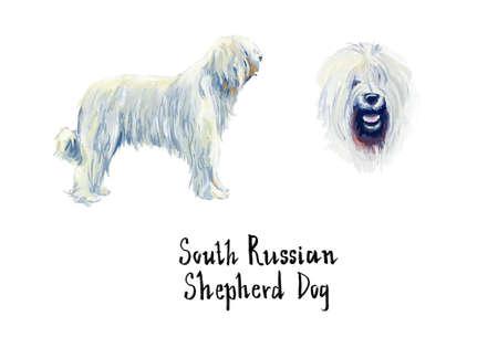 cute dog: South Russian Shepherd Dog. Gouache hand drawn illustration.