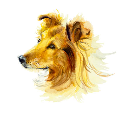 shaggy: Collie. Portrait dog. Watercolor hand drawn illustration. Stock Photo
