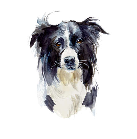 Border Collie. Portrait dog. Watercolor hand drawn illustration.