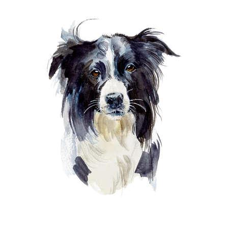 Border Collie. Portret hond. Waterverf handgetekende illustratie.