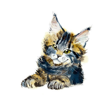 shaggy: Kitten maine coon. Portrait animal. Watercolor hand drawing illustration Stock Photo