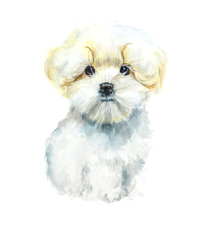 Maltese dog. Portrait of a small dog. Watercolor hand drawing illustration Stock Photo