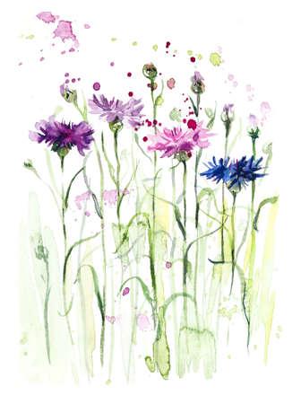 Cornflowers. Flower backdrop. Sketch. Watercolor hand drawn illustration. Imagens