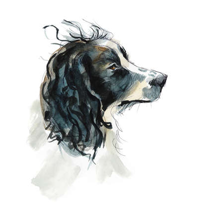 Sprinter spaniels. Portrait dog. Watercolor hand drawing illustration