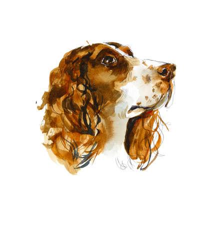 Sprinter spaniels. Portrait dog. Watercolor hand drawing illustration