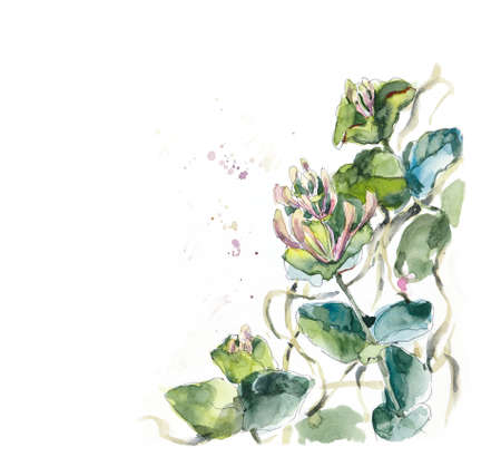 Perfoliate honeysuckle. Angular composition. Flower backdrop. Watercolor hand drawing illustration