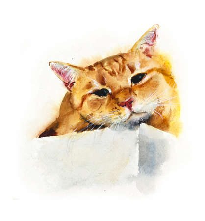 Red domestic cat. Watercolor hand drawing illustration Archivio Fotografico