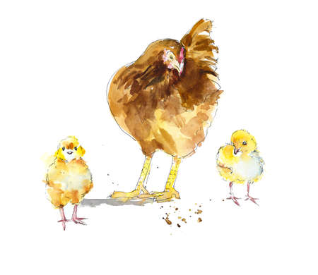 Hen with two yellow chicken. Watercolor hand drawing illustration