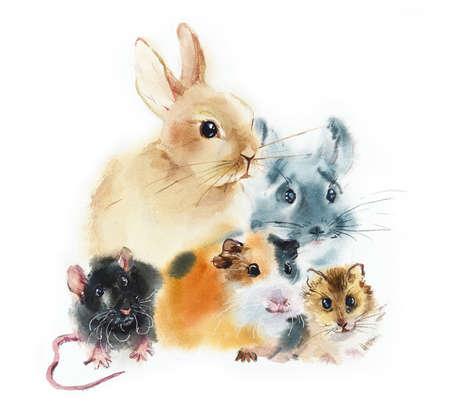 Rabbit, guinea pig, chinchilla, rat, hamster. Pets. Watercolor hand drawing illustration