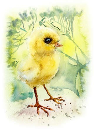 Chicken. Watercolor hand drawn illustration.