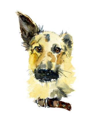 A breedless dog from the shelter. Watercolor hand drawn illustration Stock Photo