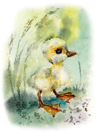 Duckling. Watercolor hand drawn illustration.