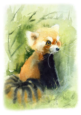 Red Panda. Watercolor hand drawn illustration.