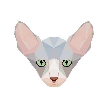Sphynx breed portrait in low poly style. Illustration