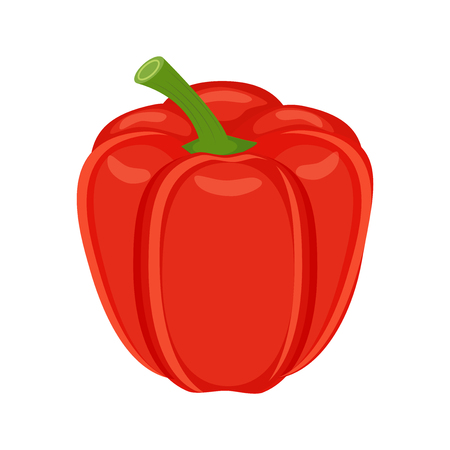 Colorful red bell pepper vegetable vector illustration isolated on white background.