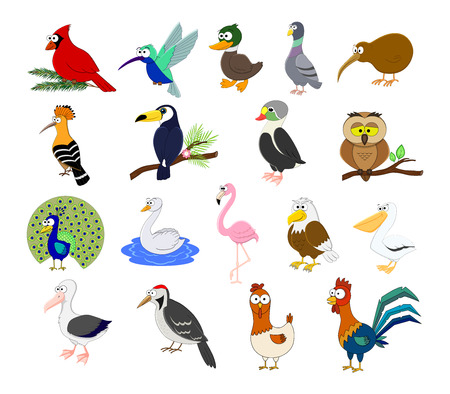 Big set of different cartoon birds vector illustration isolated on white background. Hen, ruster, peacock, albatross, flamingo, eagle, swan, owl, hoopoe, kiwi, toucan, hummingbird.