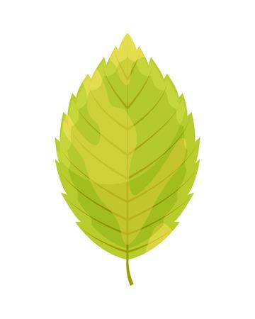 Autumn orange leaf isolated on a white background. Vector illustration