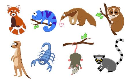 Set von 8 exotischen Tieren im Cartoon-Stil. Tiervektorillustration lokalisiert auf weißem Hintergrund. Roter Panda, Chamäleon, Skorpion, Ameisenbär, Lemur, Loris, Erdmännchen, Opossum.