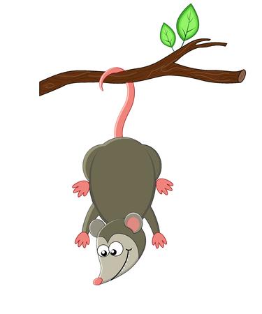 Cute cartoon opossuml. Vector illustration. Smiling opossum. exotic animals
