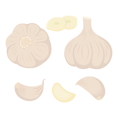 Set of garlic heads gloves and slices vector illustration isolated on white background.