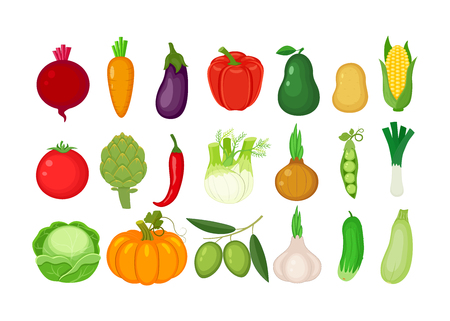 Big set of different vegetables. Vector illustration isolated on white background.