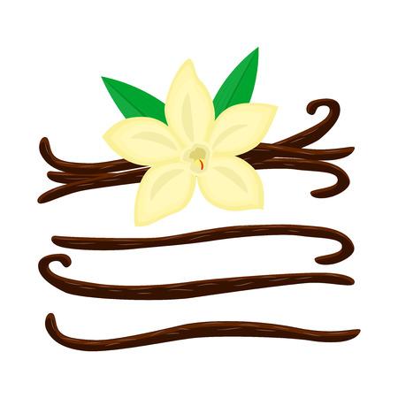 Satz von Cartoon-Vanila-Blume mit verschiedenen Vanille-Stics-Vektor-Illustration auf weißem Hintergrund. Vektorgrafik