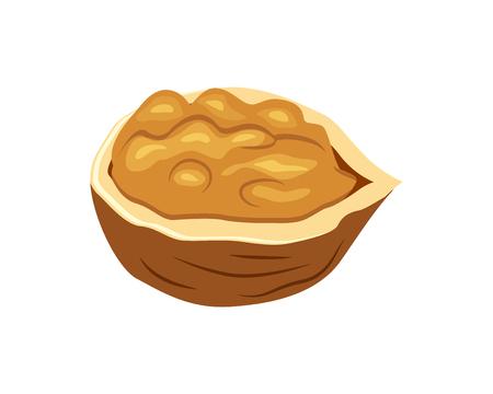 Half walnut vector illustration isolated on white background.