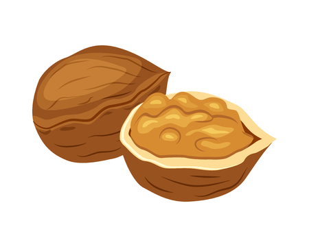 Whole and half walnut vector illustration isolated on white background.