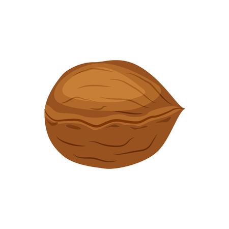 Whole walnut vector illustration isolated on white background.