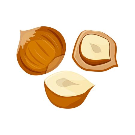 Hazelnuts set vector illustration isolated on white background.