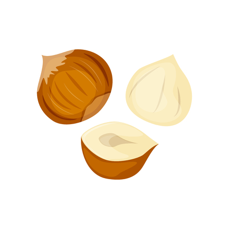 Set of whole andhalf hazelnuts vector illustration isolated on white background. Ilustração