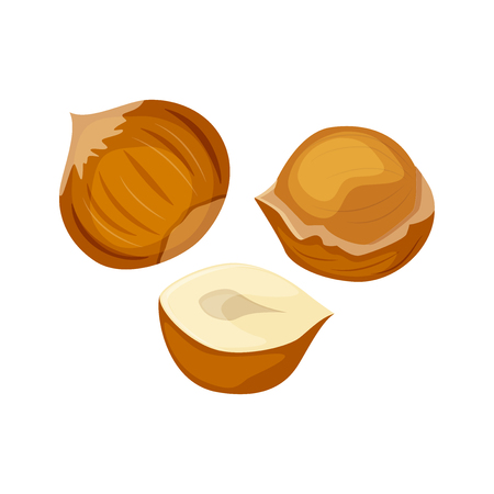 Vector illustration of a hazelnut peeled whole, chopped into halves.  . Vector icon on the white background.
