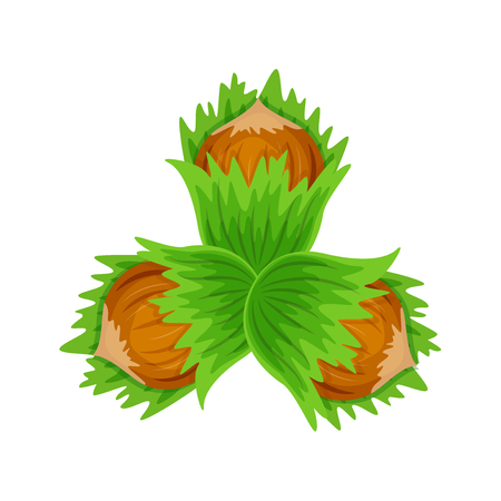 Set three hazulnuts with green lleaves vector illustration isolated on white background.