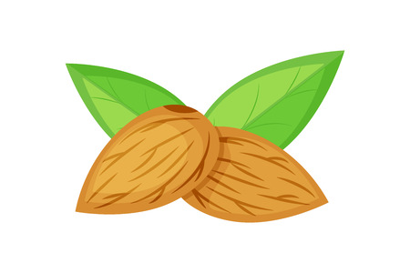 two almond nuts with green leaves vector illustration isolated on white background.
