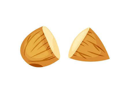 Cut almonds vector illustration isolated on white background.