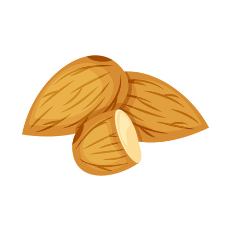 Set of whole and half  almond nuts vector illustration isolated on white background.