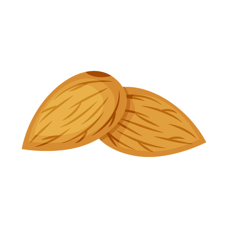 Two almond nuts vector illustration isolated on white background.