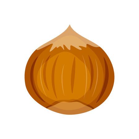 Hazelnut vector illustration isolated on white background.