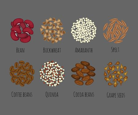 Set of different seeds and grains vector illustration in a cartoon flat style isolated on gray background.Beans, amaranth, spelt, quinoa, cocoa, coffee, buckwheat and grape seeds vectors.