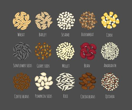 Set of different seeds and grains vector illustration isolated on gray background.Beans, amaranth, spelt, quinoa, cocoa, coffee, buckwheat,wheat, barley,sesame, corn, pumpkin seeds, rice, sunflower seeds and grape seeds vectors.