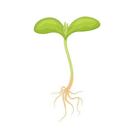 Green fresh plant sprout with roots vector illustration isolaed on white background.
