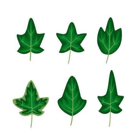 Different ivy leaves set in a cartoon flat style  illustration  isolated on white background.