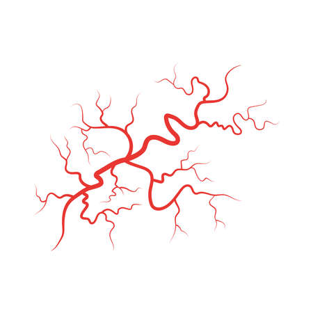 Human veins red blood vessel vector illustration isolated on white background.