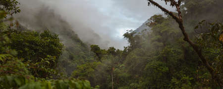 Cloud Forest in Peru, panoramic view of the tropical jungle on the northeast slope of the Andean mountain range.